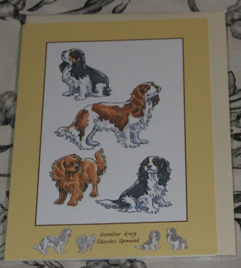 King Charles Cavalier card  with pictures of the breed